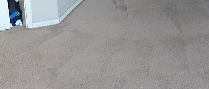 Keep Your Carpet Cleaning